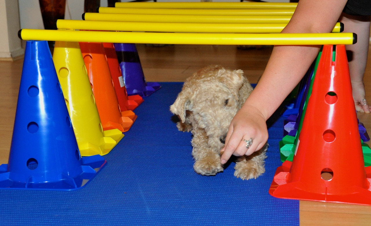 Dr. Sofia Brickman | Paw by Paw Veterinary Rehabilitation